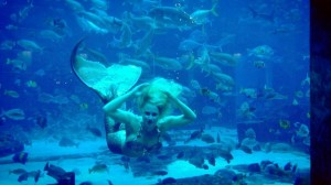 mermaid dubai atlantis the palm