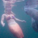 mermaid and manatee