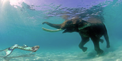 mermaid melissa swimming underwater ocean with animal elephant