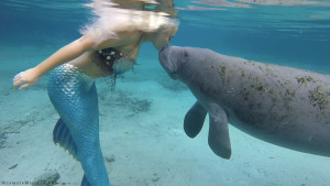 mermaid melissa manatee kiss Feb 2016