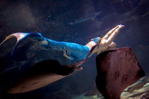 upsidedown-mermaid-stingrays-pic mermaid melissa