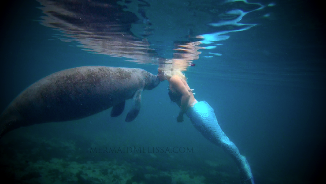 �mermaid and manatee� conservation to help save the