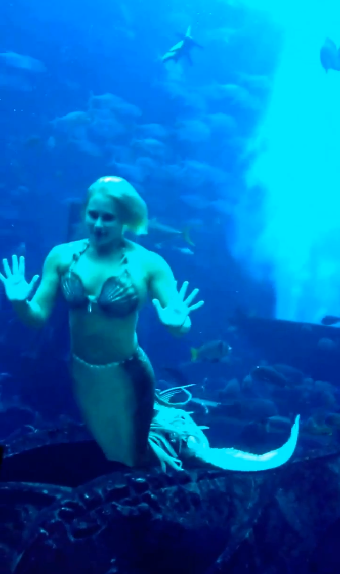 Dubai S First Official Real Life Mermaid Melissa