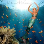under the sea  real life mermaid melissa