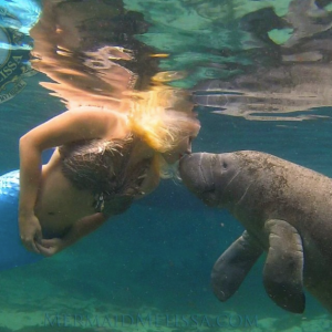 mermaid and manatee kisses
