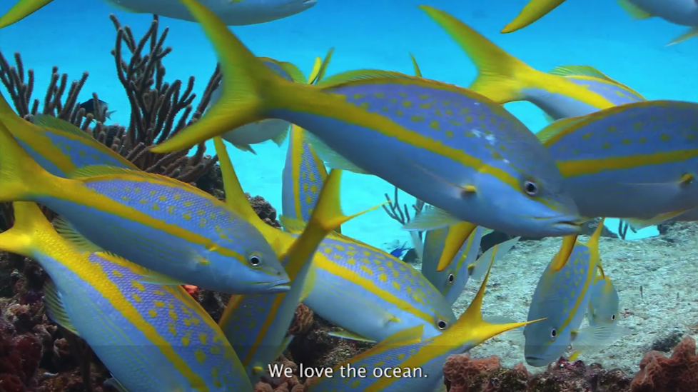 world oceans day videos