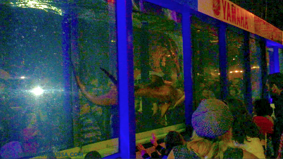 Mermaid melissa performing for live event in a giant fish for Mermaid fish tank