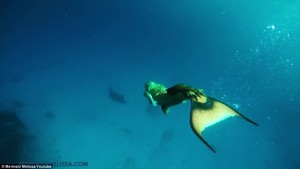 mermaid swims with manta rays mermaid melissa