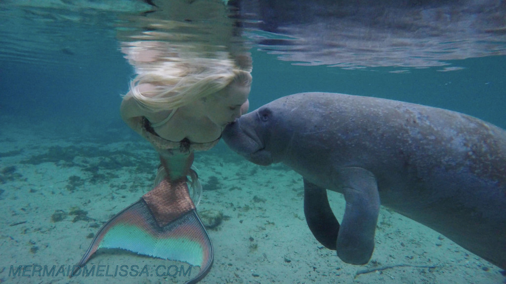 the manatee should be protected The latest tweets from save the manatee (@savethemanatee) official twitter account for the save the manatee club  verified account protected tweets .