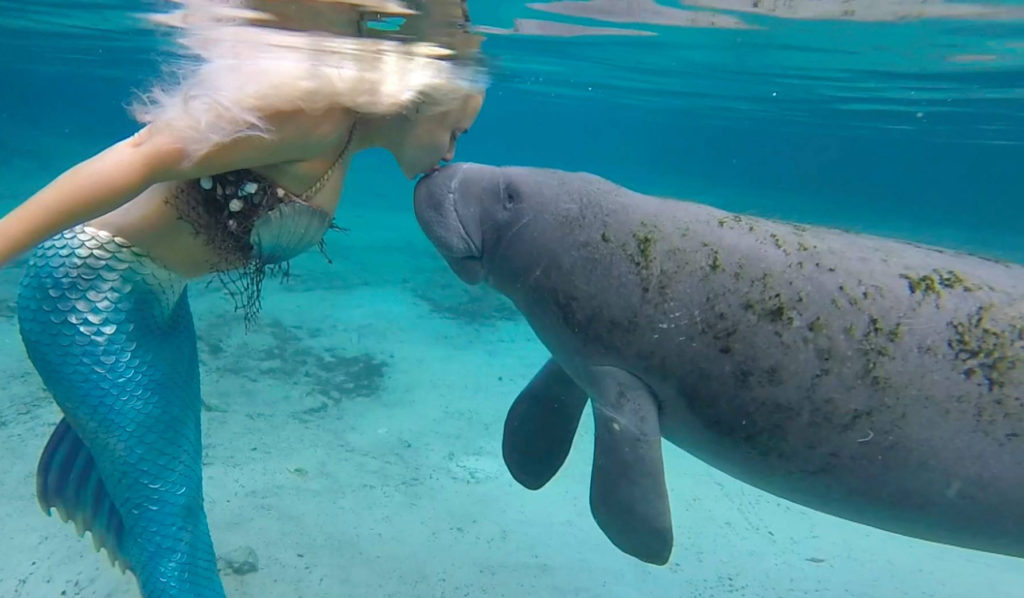 mermaid and manatee kiss mermaid melissa