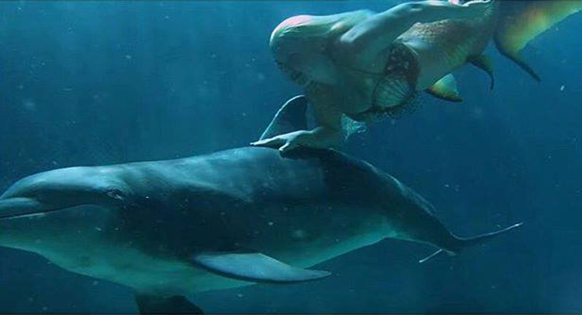 Mermaid Melissa Bonds With Dolphins In The Ocean A Real