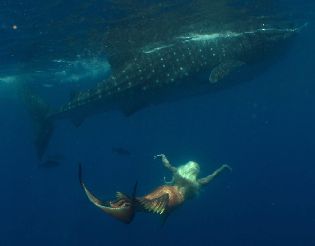 mermaid melissa whale shark swim underwater